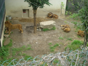 tomioka-safaripark47.jpg