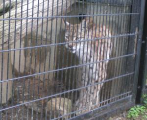 tomioka-safaripark54.jpg