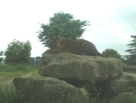 tomioka-safaripark58.jpg