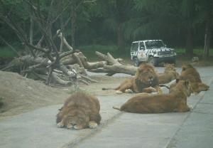 tomioka-safaripark60.jpg