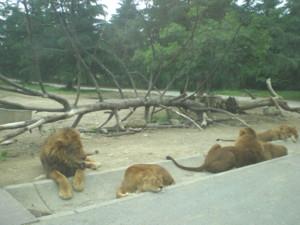 tomioka-safaripark62.jpg