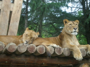 tomioka-safaripark64.jpg