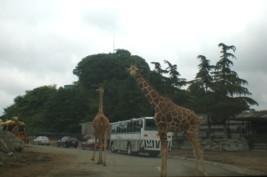 tomioka-safaripark9.jpg