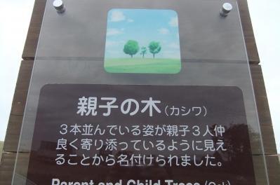 2012_10030028.jpg