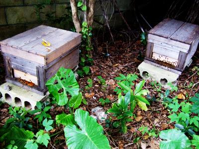 みつ蜂の巣箱