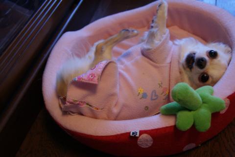 まりん♪in strowberry bed