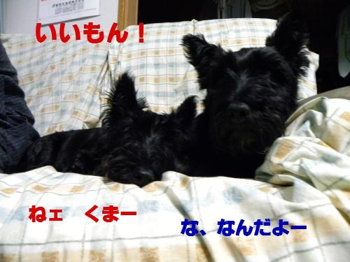DSCN1785_convert_20110912135214 ブログ用