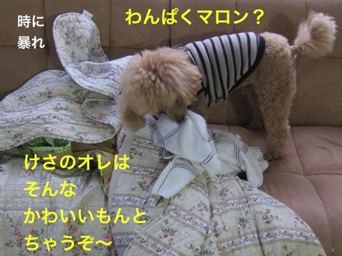 th_IMG_5029-2.jpg