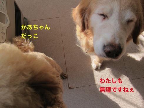 th_IMG_5804-1.jpg