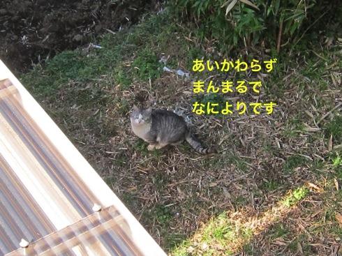 th_IMG_5833-1.jpg
