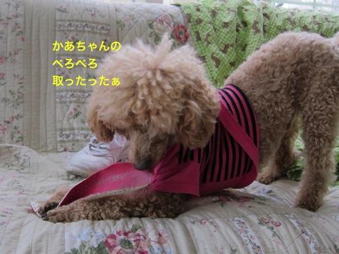 th_IMG_5838-1.jpg