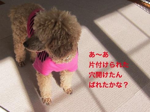 th_IMG_5880-1.jpg