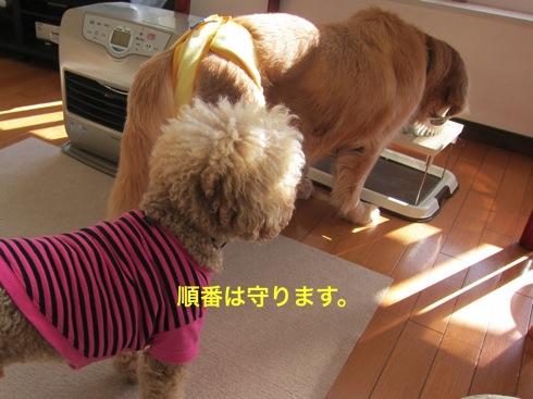 th_IMG_5884-1.jpg