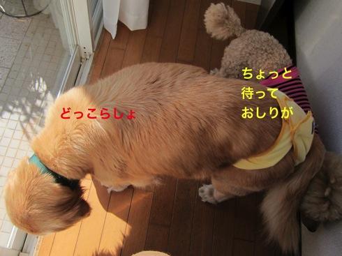 th_IMG_5954-1.jpg