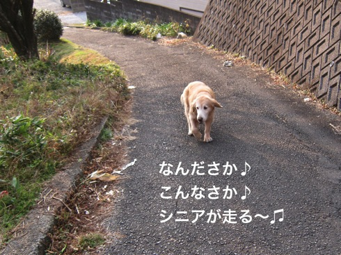 th_IMG_5989-1.jpg