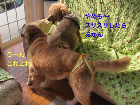 th_IMG_6004-1.jpg