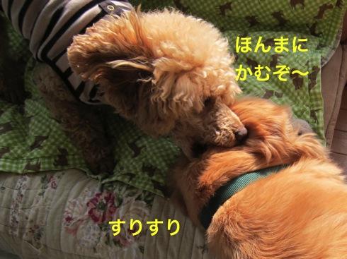 th_IMG_6005-1.jpg