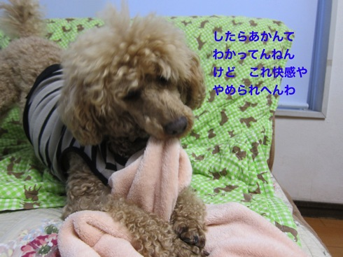 th_IMG_6041-1.jpg