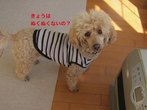 th_IMG_6071-1.jpg