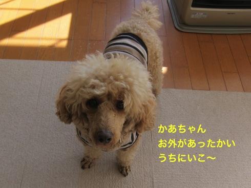 th_IMG_6073-1.jpg