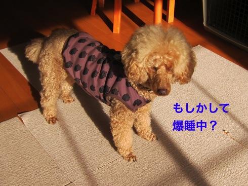 th_IMG_6094-1.jpg
