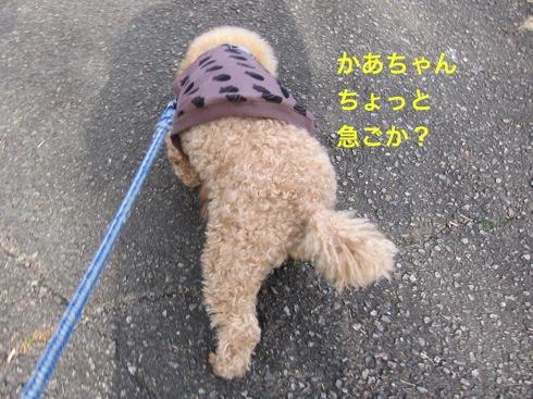 th_IMG_6098-1.jpg