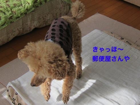 th_IMG_6112-1.jpg