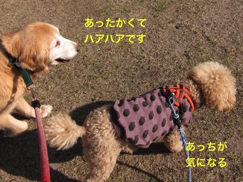 th_IMG_6117-1.jpg