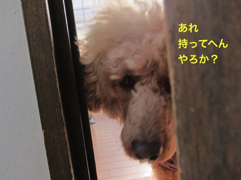 th_IMG_6137-1.jpg