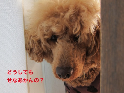 th_IMG_6145-1.jpg