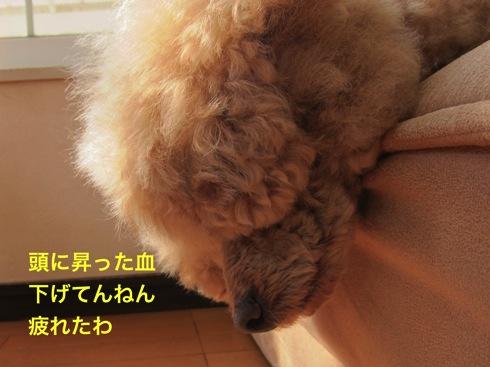 th_IMG_6210-1.jpg