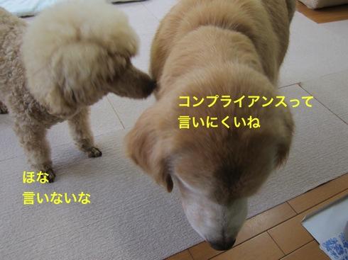 th_IMG_6271-1.jpg