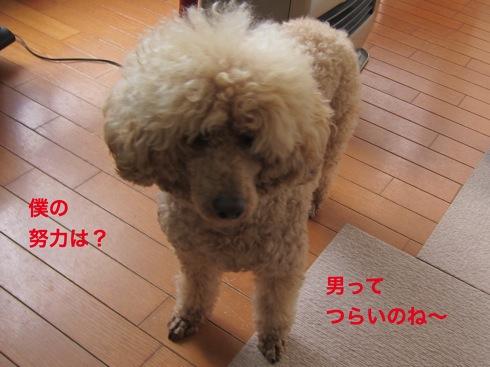 th_IMG_6334-1.jpg