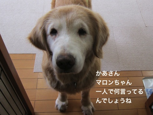 th_IMG_6339-1.jpg