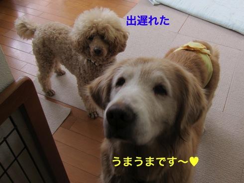 th_IMG_6345-1.jpg