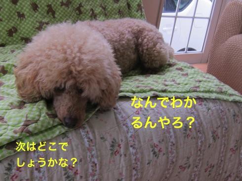 th_IMG_6359-1.jpg