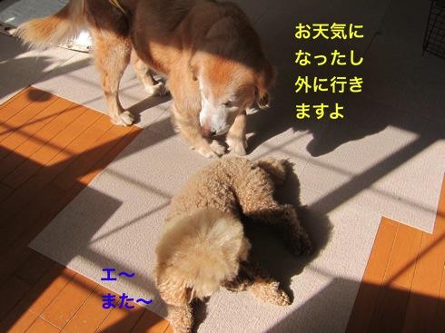 th_IMG_6380-1.jpg