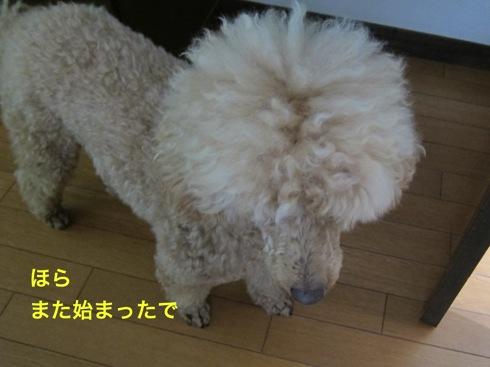 th_IMG_6404-1.jpg