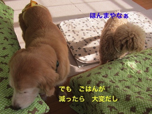 th_IMG_6405-1.jpg