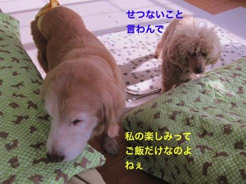 th_IMG_6406-1.jpg