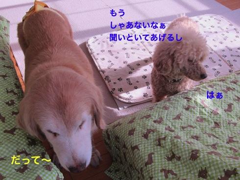 th_IMG_6407-1.jpg