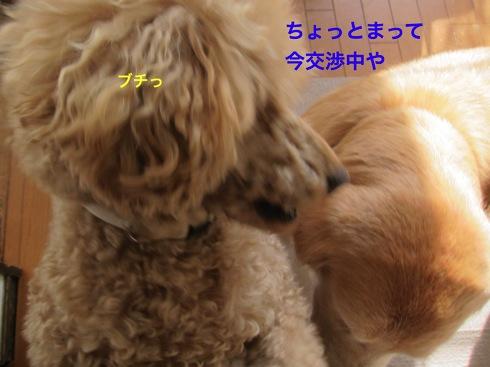 th_IMG_6408-1.jpg