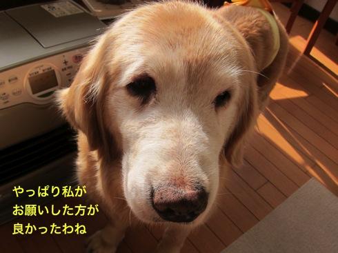 th_IMG_6415-1.jpg