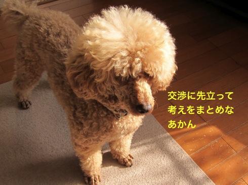 th_IMG_6416-1.jpg