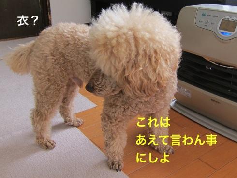 th_IMG_6421-14.jpg