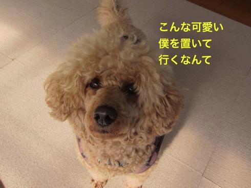 th_IMG_6453-1.jpg