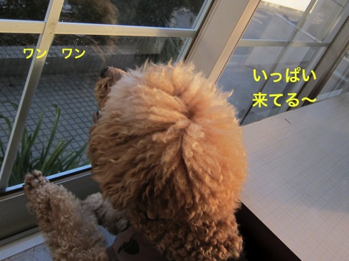 th_IMG_6523-1.jpg