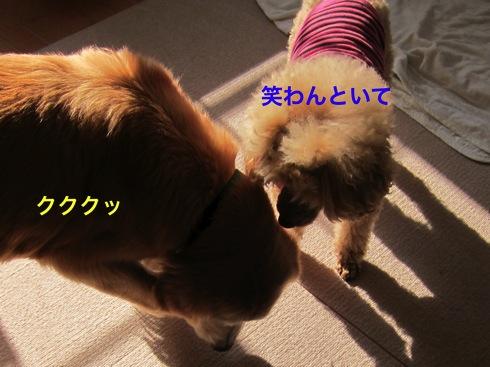 th_IMG_6545-1.jpg