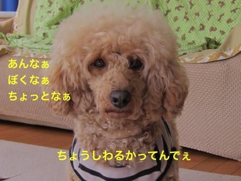 th_IMG_6592-1.jpg