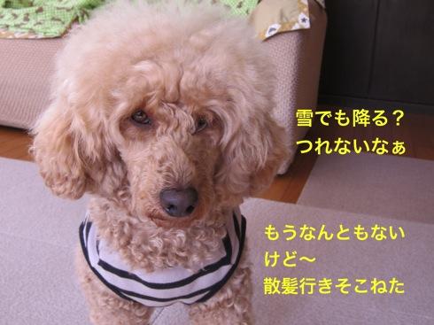 th_IMG_6597-1.jpg